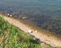 gamborg fjord